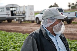 Jaime Machado supervises lettuce pickers in a field just outside of Yuma, Arizona. Farming in this area relies heavily on migrant farm workers from Mexico to plant and harvest it's semi-annual crops. To insure sanitary purity, all workers must wear rubber gloves and hair nets. (Photo: Michel Duarte/Walter Cronkite School of Journalism and Mass Communication)