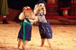 Two dogs dance during a performance at Zoppe Italian Family Circus at Chandler Center for the Arts, on Friday, Jan. 6, 2011. Michel Duarte/The Arizona Republic.